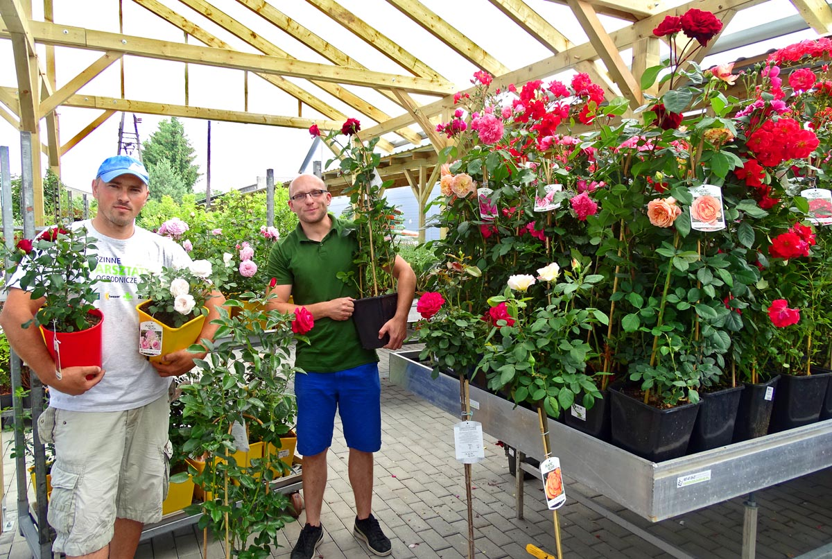 23. Juni: Tag der Rose im Gartencenter