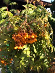 Agrogobex: Der Garten im Herbst