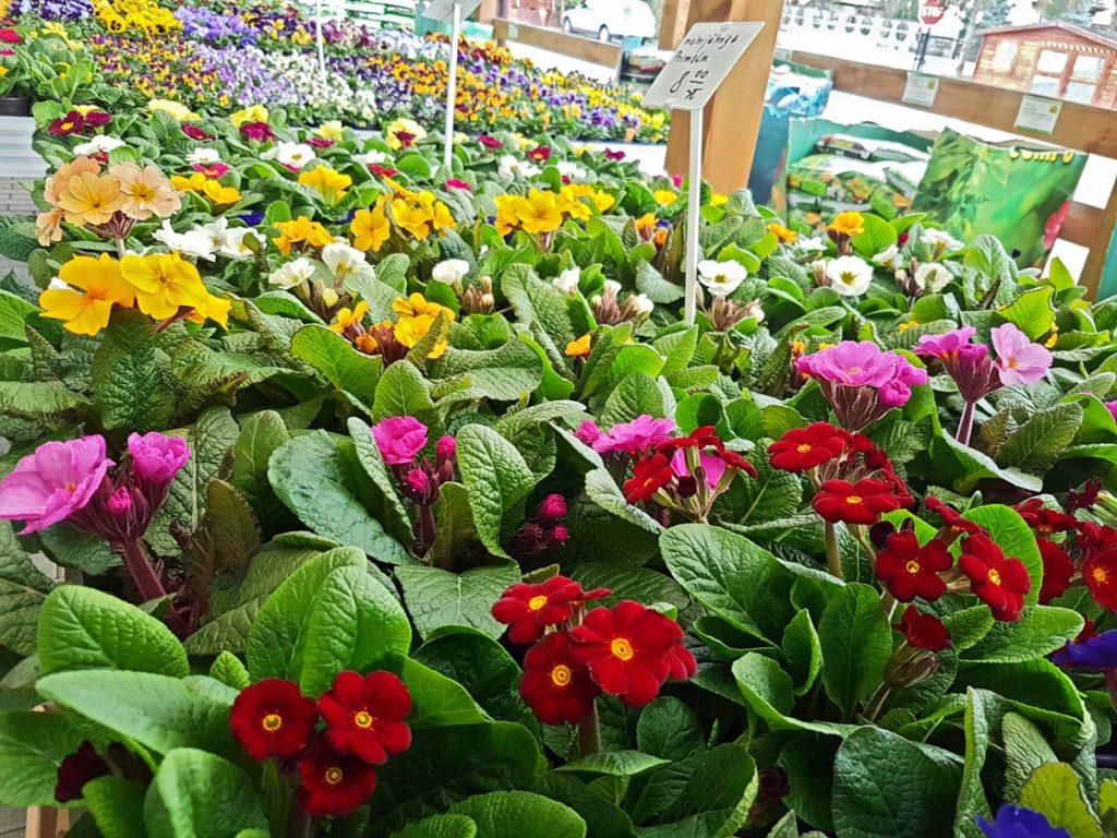 Der Frühling kann kommen!