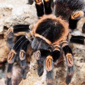 9. bis 16. Juli – Spinnen-Ausstellung im SMOK
