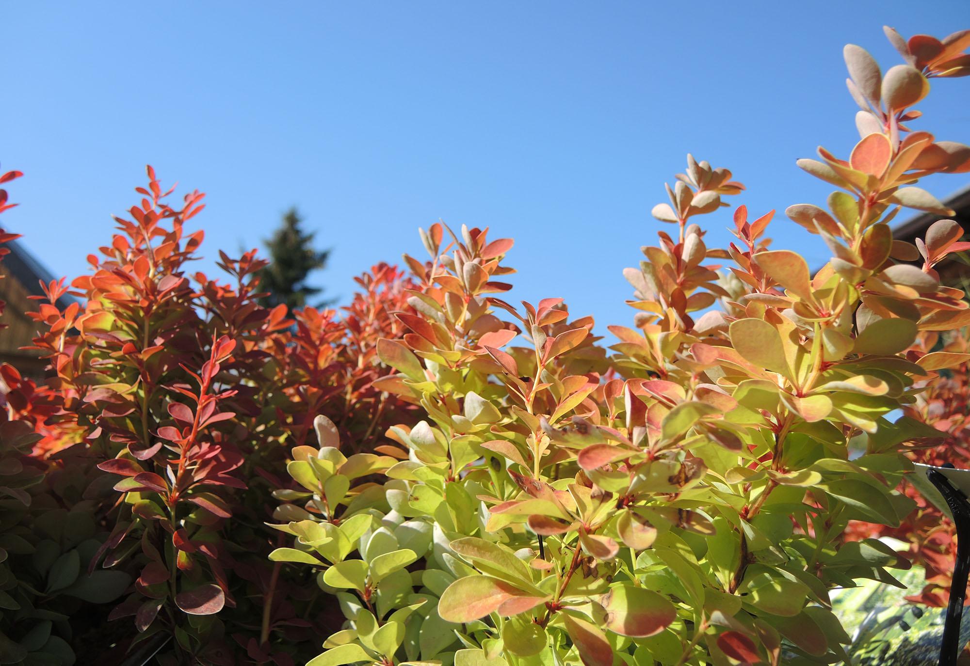 Der Garten im Herbst ist auch schön